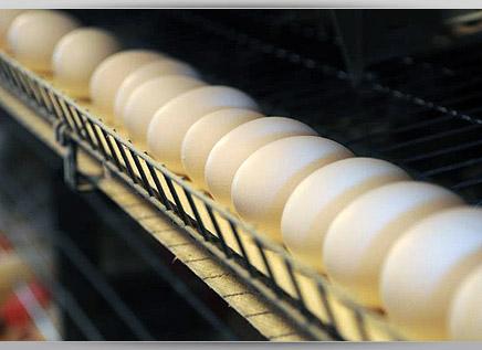 Комплексная переработка яйца